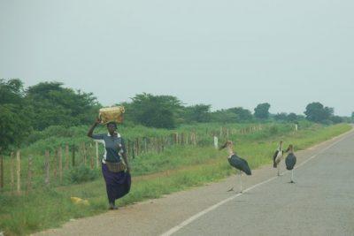 Day 99 – 13.7.2011  Good by, Uganda!