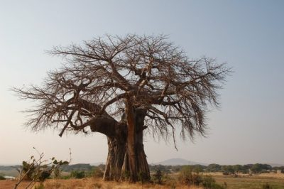 Day 110 – 24.7.2011  One last day in the bush of Tanzania