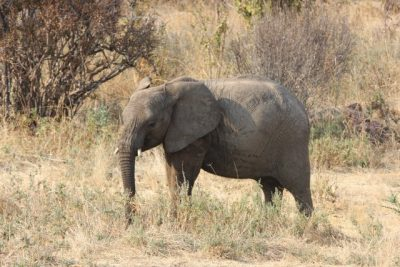 Day 108 – 22.7.2011  From Baobab Valley Camp into Ruaha National Park