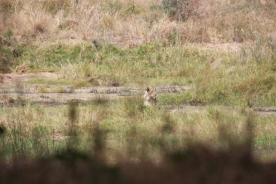 Day 109 – 23.7.2011  Birds, lions and birds at the Ruaha River