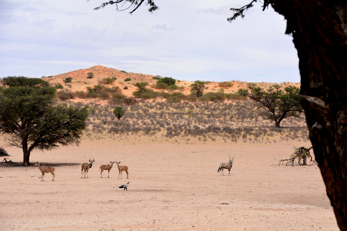 Kudus and Oryx at a Kgalagadi Waterhole